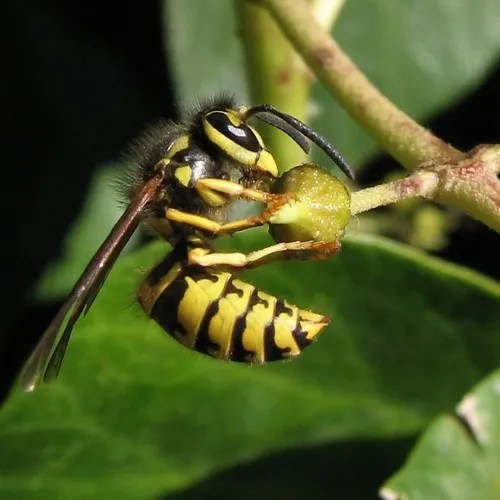 Top 10 Useful Insects You Want Invading Your Garden (6/6)