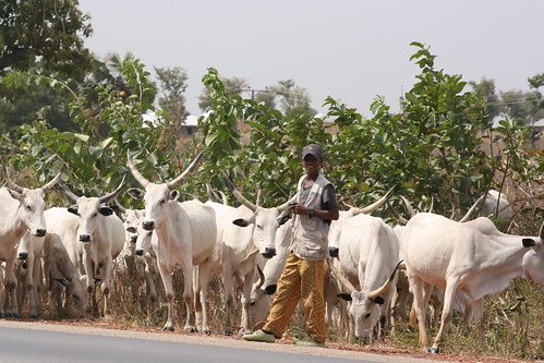Fulani Herdsman In Nigeria by Jujufilms