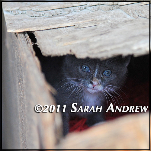 Wayward Kitten