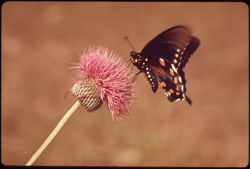 Milk Wort and Butterfly in the Texas Countryside, near San Antonio, 06/1973 by The U.S. National Archives