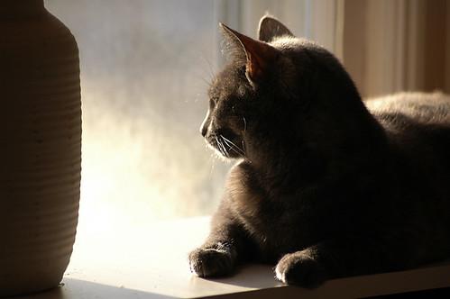 My Cat in Office Window