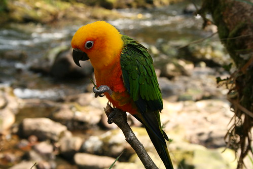 Parrot by Danny Chapman (http://www.flickr.com/photos/11152520@N03/)