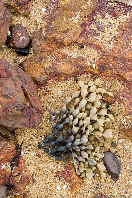 Seaweed Gradient