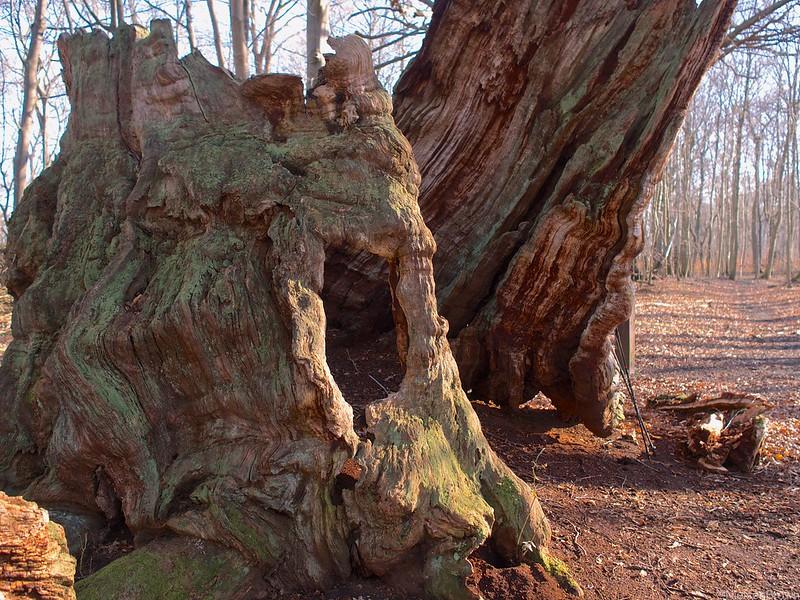 Remnants of the Old Oak