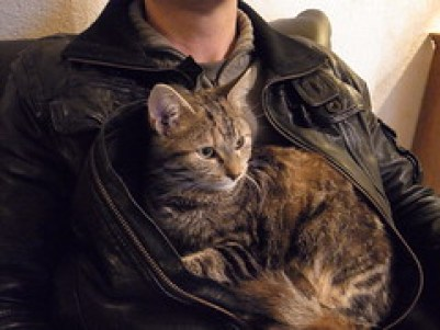 Avoiding Hypothermia in Cats - Cuddling with kitty