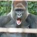 Zoo 576