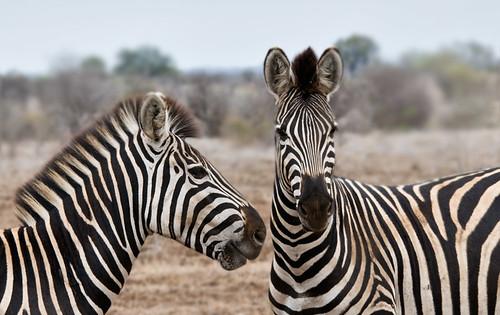 Stripes by Marc_Scott-Parkin