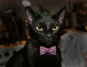 Adopt Black CatsIggy Loves You!