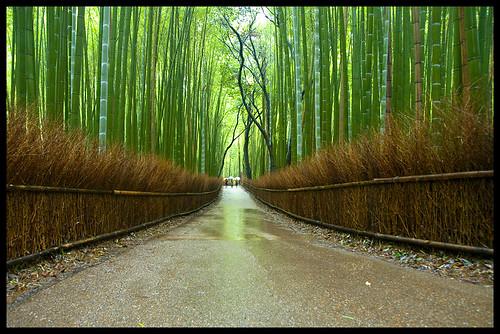 Return to Arashiyama