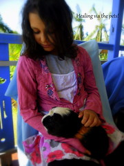 daughter_guineapig2_june2011