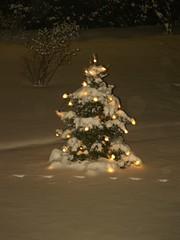 Weihnachtsbaum im Schnee