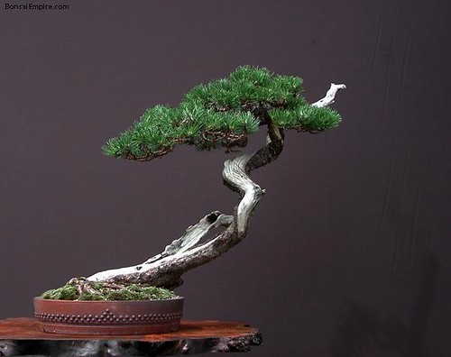 top-bonsai-gallery-l-43
