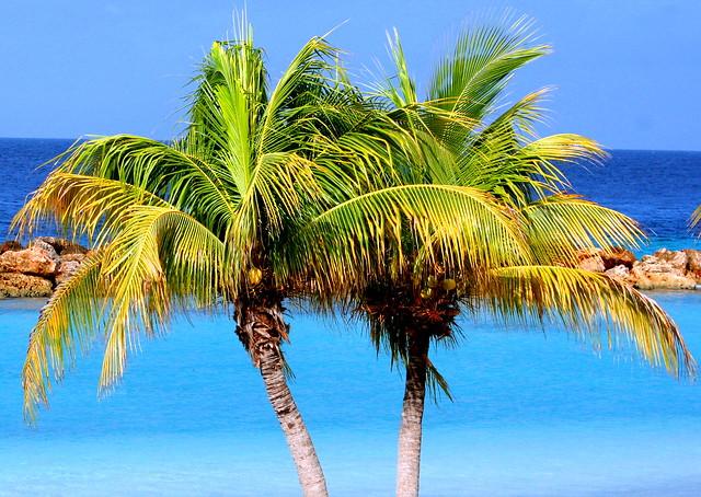Lion's Dive Resort Beach,Curacao,Caribbean Sea