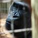 Zoo 557
