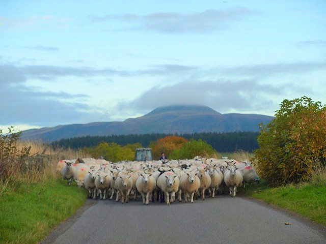 Rolling Roadblock