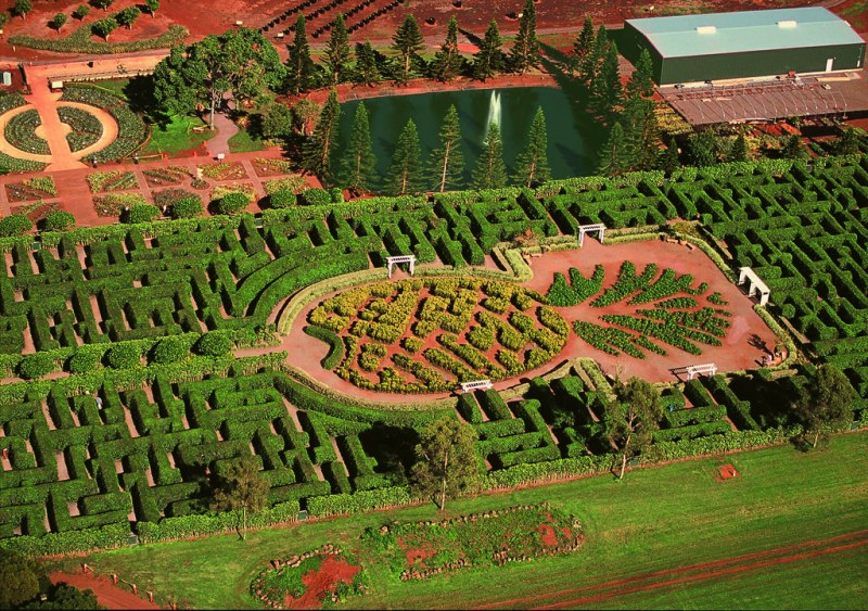 Dole Plantation: The Maze