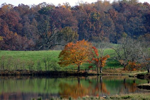 orange trees reflected, somewhere in VA
