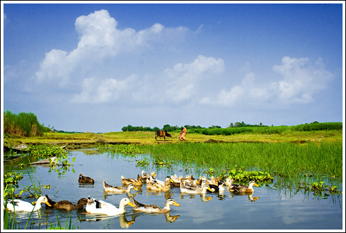 In the land of landscapes - III [..Singair, Bangladesh..]