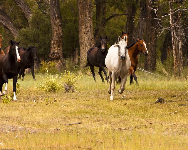 Zappata Ranch-18