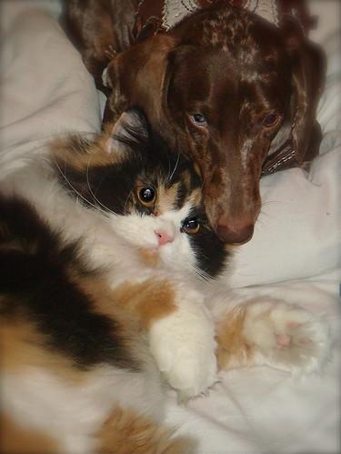 cat/dog love