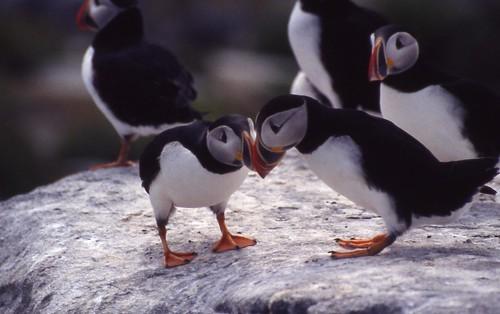 海鳥 | 臺灣環境資訊協會-環境資訊中心