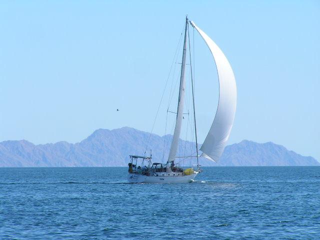 sailing sailboat sails