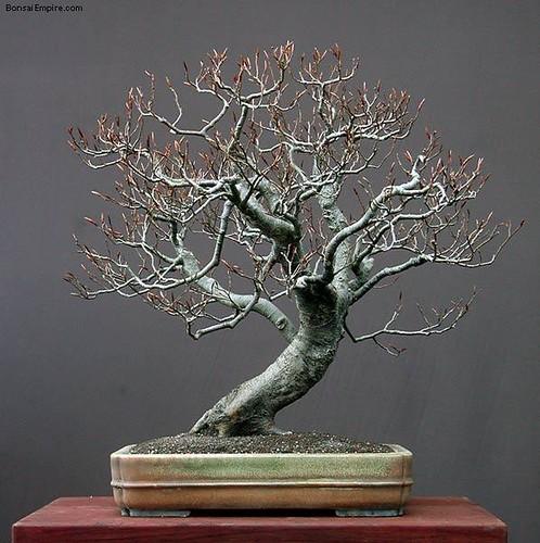 top-bonsai-gallery-l-42