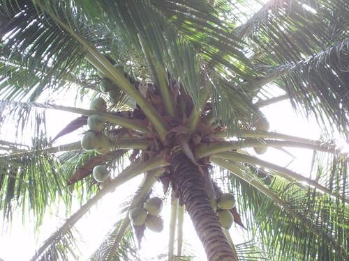 200906200349_coconut-palm-owl