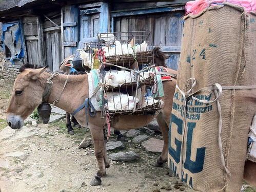 nepal 108