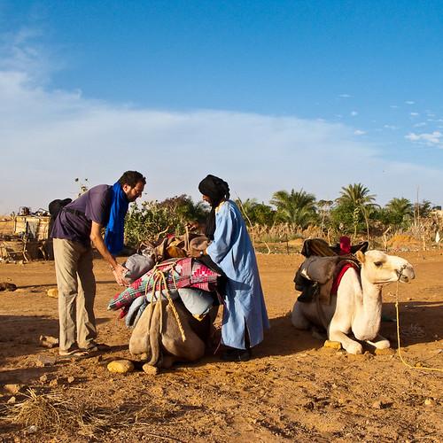 Kamel bepacken