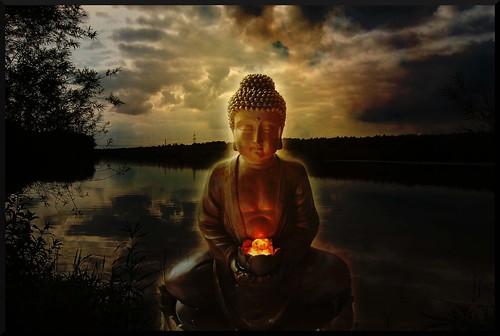 Lotos Buddha