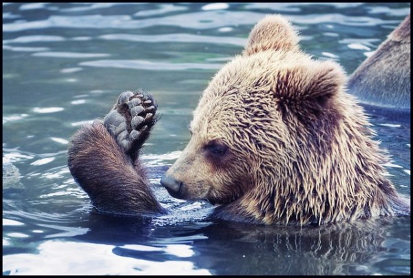 Bear (Bare) Foot