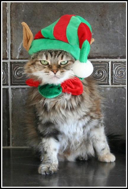My disgruntled little Elf