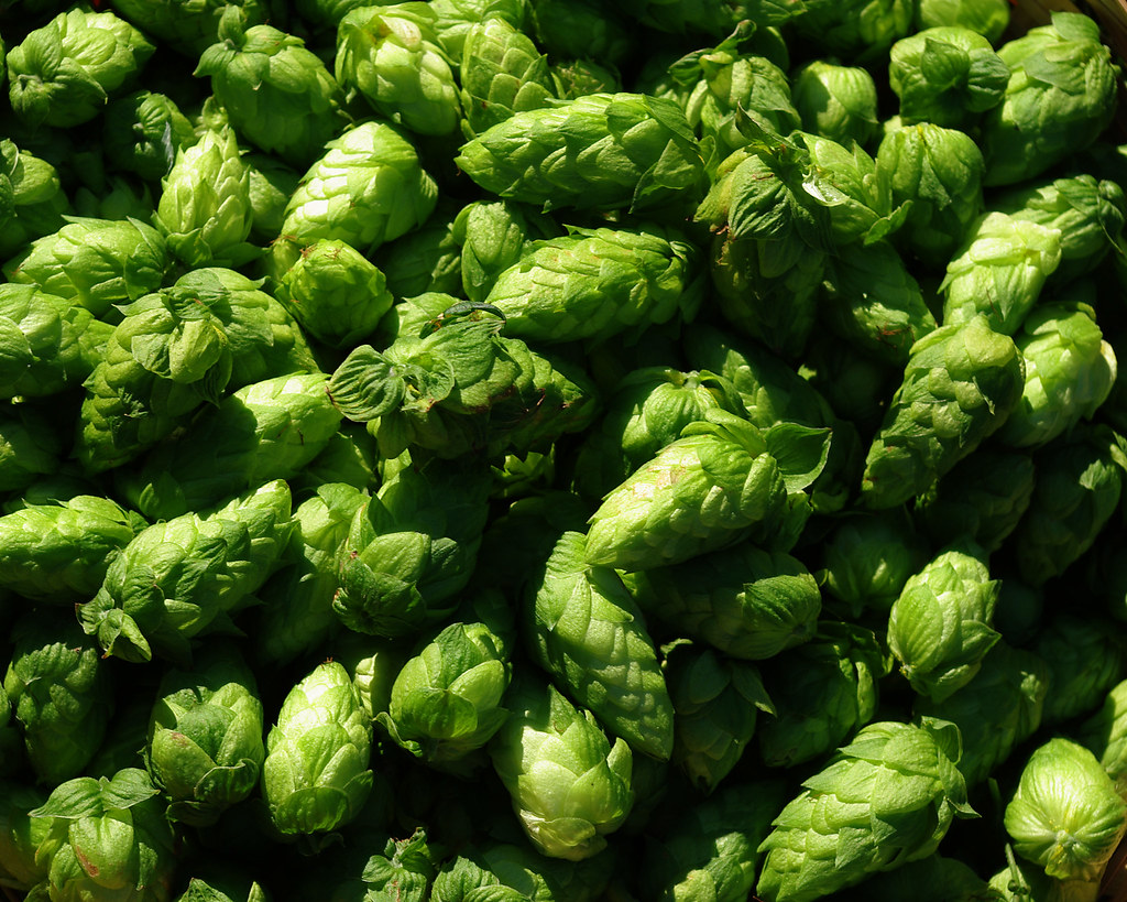 hop harvest 2009 008-8x10