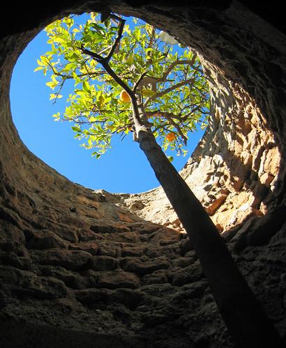 Underground fruit tree