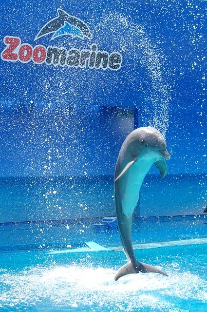 dolphinleap4