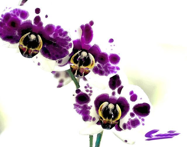Watercolor Orchids A Gallery On Flickr