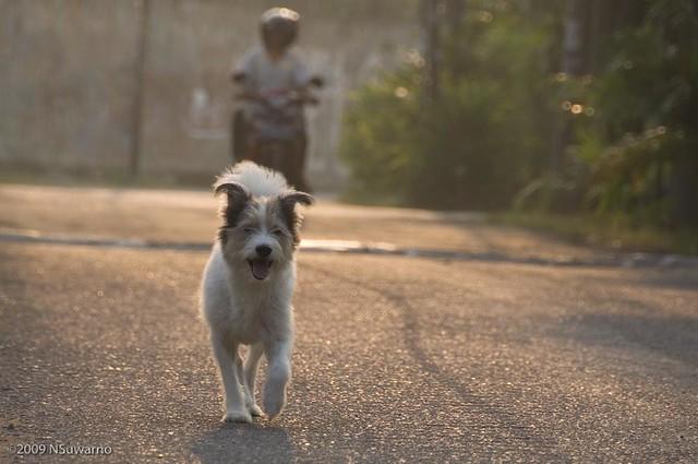 Juli - the dog