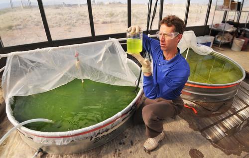 Turning algae into energy