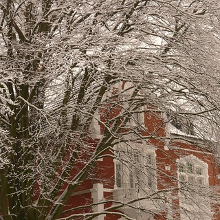 red house with tree as companion