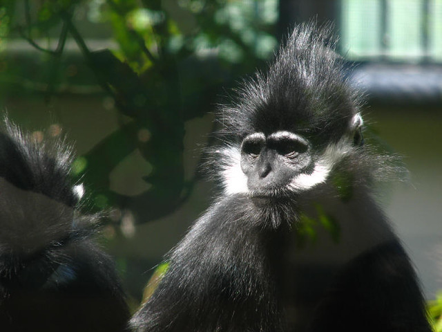Photo:Monkey By:Fetching Photos