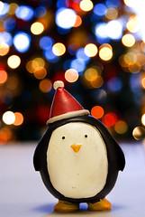 HAPPY CHRISTMAS BOKEH! XXX WWW.SIMONKEEPING.CO.UK