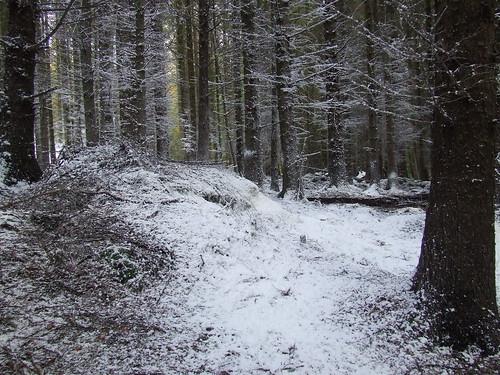 La foresta di Tollymore, con la neve finta