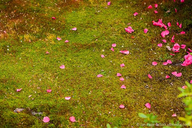 Flower petals on moss