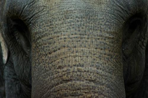 20110603_Zoo_20