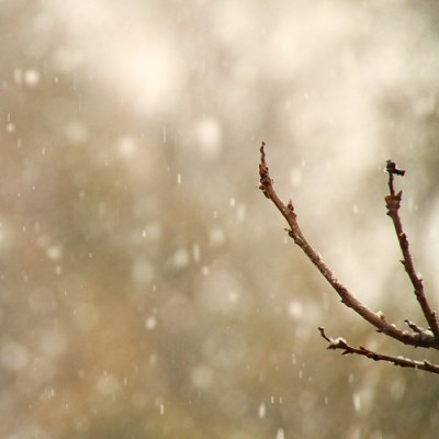 catch the falling snow-keh