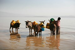 Getting water from Lake Langano