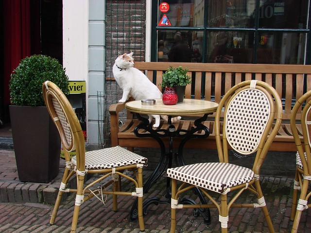 Café Cat [Day 71/365]