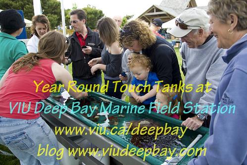 BC Shellfish Festival Touch Tank