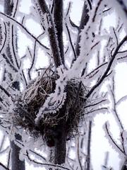 Winter birds nest.